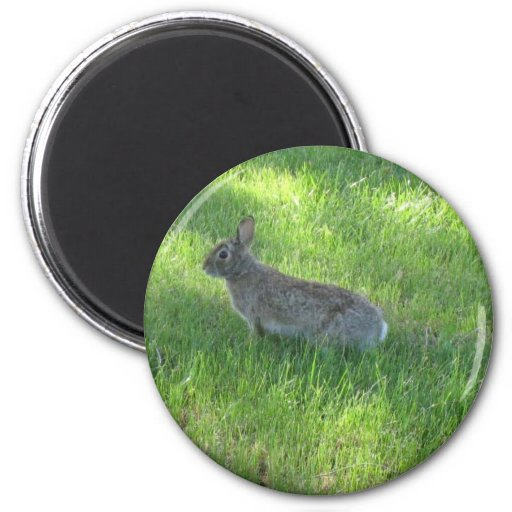 conejo imán redondo 5 cm