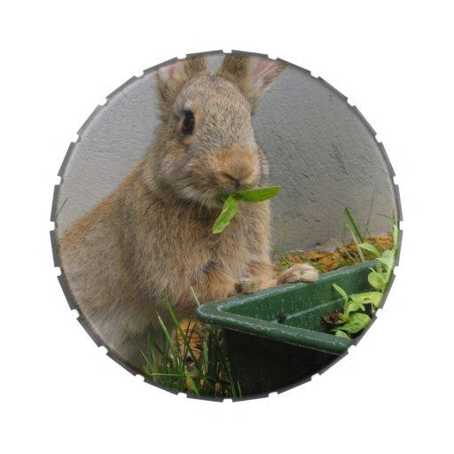 Conejo Latas De Dulces