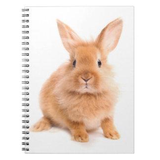 Conejo Cuadernos