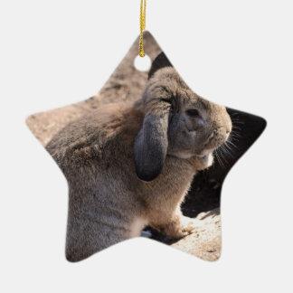 Conejo lindo ornamento para reyes magos