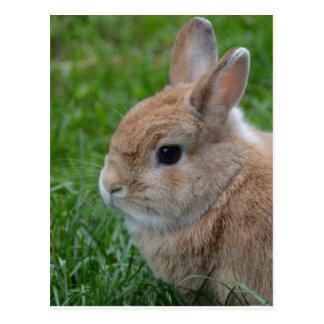 Conejo lindo postales