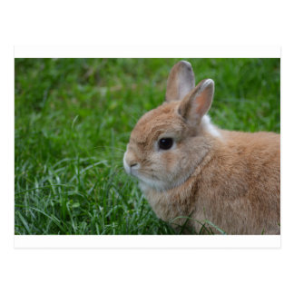 Conejo lindo tarjetas postales