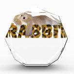 Conejo mullido - jengibre peludo de los conejitos