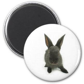 conejo negro imán de frigorífico