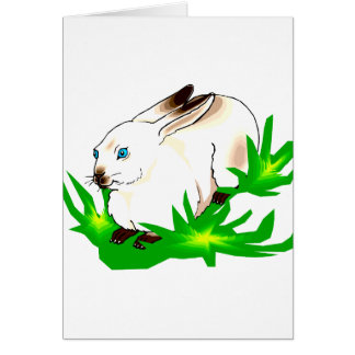 Conejo observado azul californiano en grass.png tarjeta pequeña
