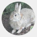 conejo pegatina redonda