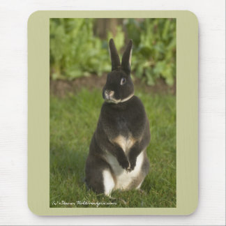 Conejo permanente de Rex Tapetes De Raton