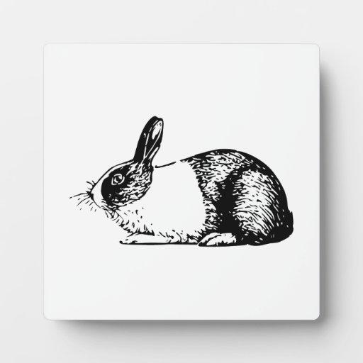 Conejo Placas De Plastico