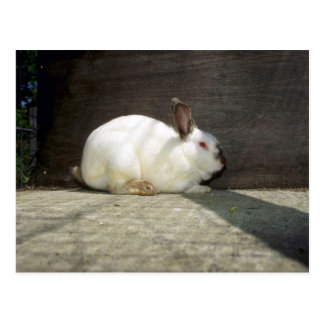 Conejo Postal
