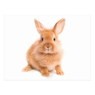 Conejo Postales