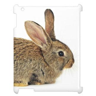 Conejo precioso