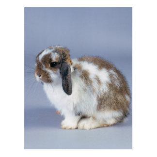 Conejo precioso 37 postal