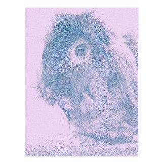 Conejo púrpura de la neblina tarjetas postales
