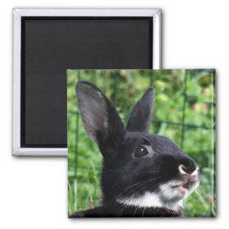 Conejo que habla imán cuadrado