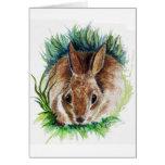 Conejo que oculta en la hierba - lápiz de la acuar felicitaciones