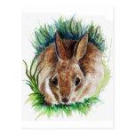 Conejo que oculta en la hierba - lápiz de la acuar postal