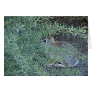 Conejo, Reno nanovoltio 2014 Tarjeta