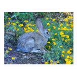 Conejo salvaje en flores amarillas tarjetas postales