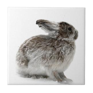 Conejo salvaje en la nieve azulejo cuadrado pequeño