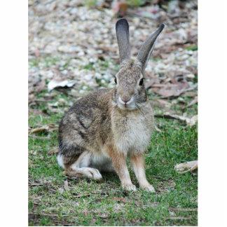 conejo salvaje imán fotoescultura