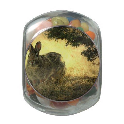 Conejo salvaje jarras de cristal