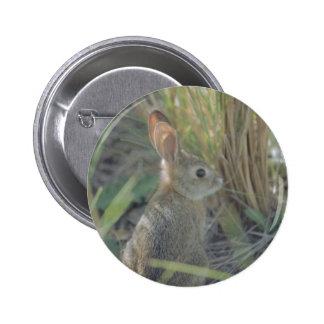 Conejo salvaje pin redondo de 2 pulgadas
