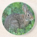 Conejo salvaje posavasos manualidades