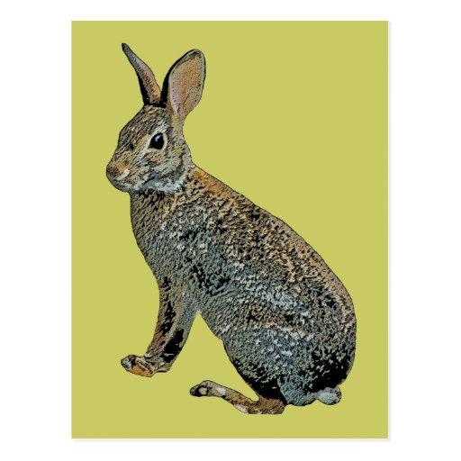 Conejo salvaje postal