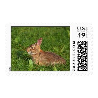 conejo salvaje sello