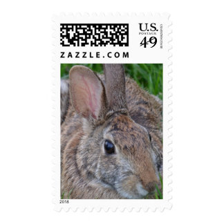 Conejo salvaje sellos