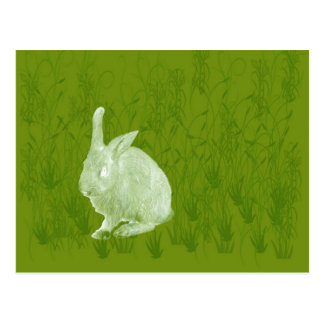 Conejo solitario de Pascua