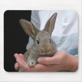 conejo tapete de ratón