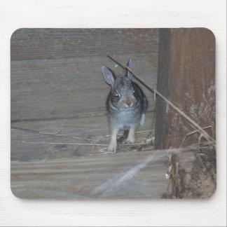 Conejo Tapetes De Raton