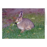 conejo tarjetón