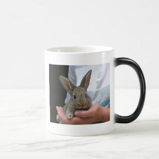 conejo taza mágica