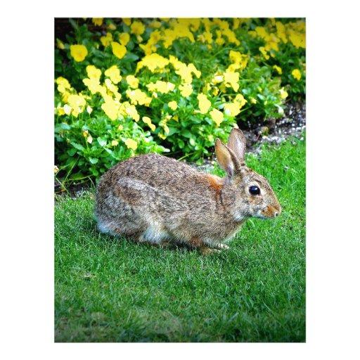 Conejo tonto membrete a diseño