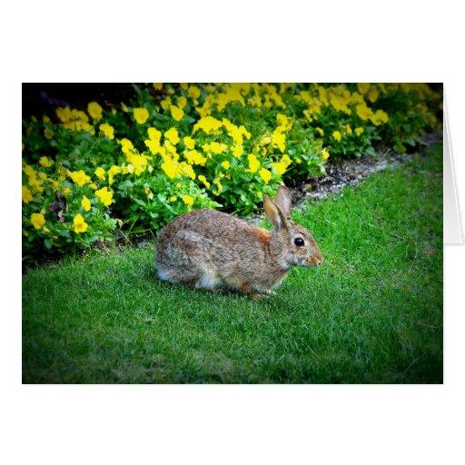 Conejo tonto tarjeton