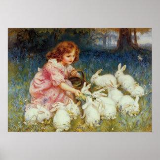 Conejos blancos de alimentación del chica póster