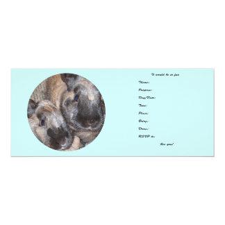 Conejos de conejito - 2 conejitos sedosos de Brown Invitacion Personalizada