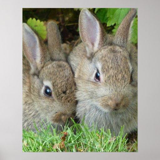 Conejos de conejito impresiones
