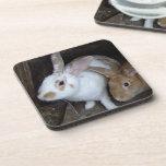 Conejos de conejito posavasos