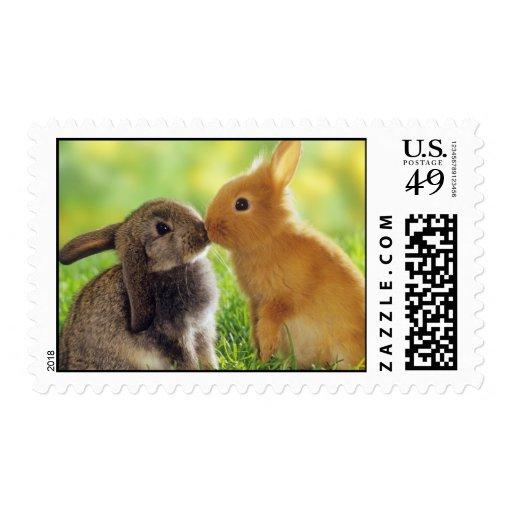 Conejos de conejito sello