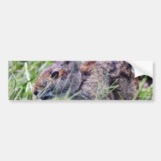 Conejos de conejitos del conejito pegatina de parachoque