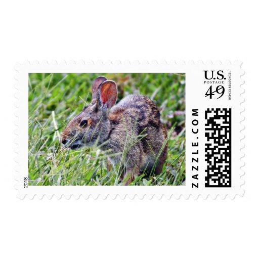Conejos de conejitos del conejito envio