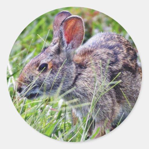 Conejos de conejitos del conejito pegatina redonda