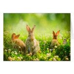 Conejos de Pascua Felicitación
