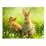 Conejos de Pascua Tarjeta Postal