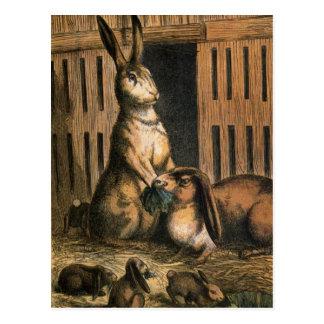 Conejos del mascota y conejitos del bebé que comen postal