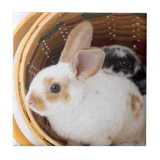 Conejos jovenes de Rex en la cesta de Pascua Azulejo Cuadrado Pequeño