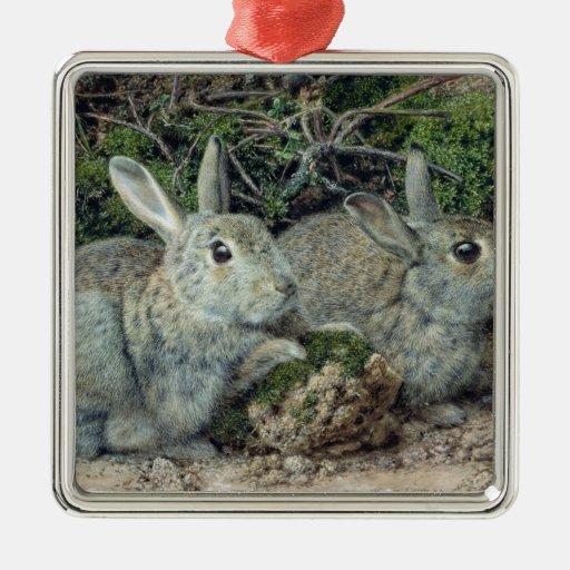 Conejos Ornamento De Reyes Magos